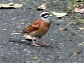 名前がわからない野鳥