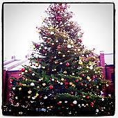 赤レンガ倉庫のクリスマスツリー(マウスオンで、今日の赤レンガ倉庫)
