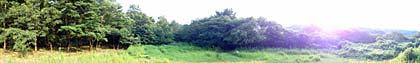 クヌギの林のスイングパノラマ