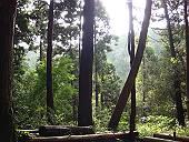 今日の森(マウスオンでスズメバチの巣)