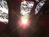 朝の太陽(マウスオンで枯れ葉)