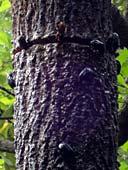 樹液に集まる虫たち