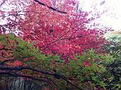 紅葉(マウスオンで、のどかな青空)