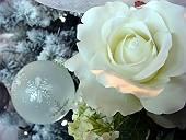 クリスマスツリーのバラ