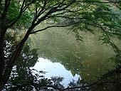 今日の瀬上池