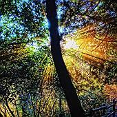 いつかの森